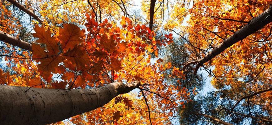 festa_d'autunno_piantravigne