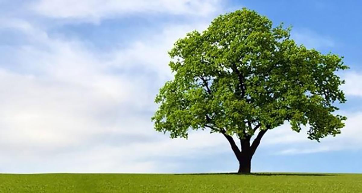 alberi_ok